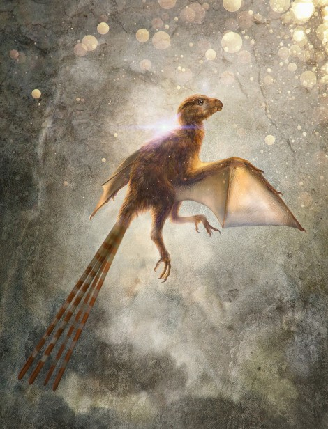 01-ambopteryx.jpg