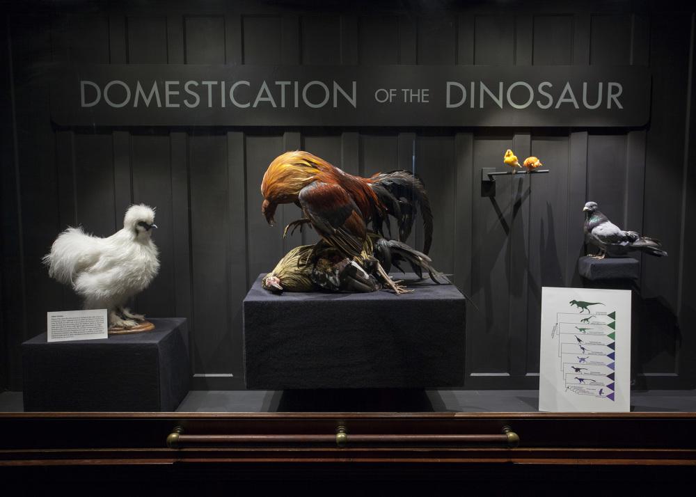 DomesticationOfTheDinosaur2_1000.jpg