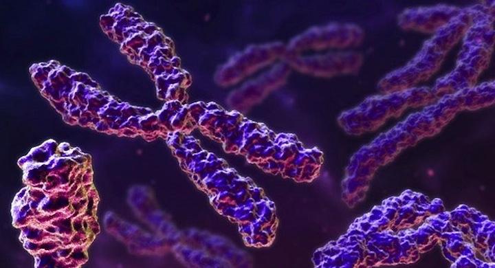Crean-el-primer-cromosoma-artificial-hito-cientifico.jpg