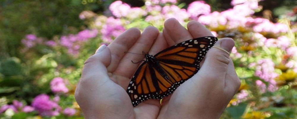 Butterfly_in_Hands_cropped.jpg
