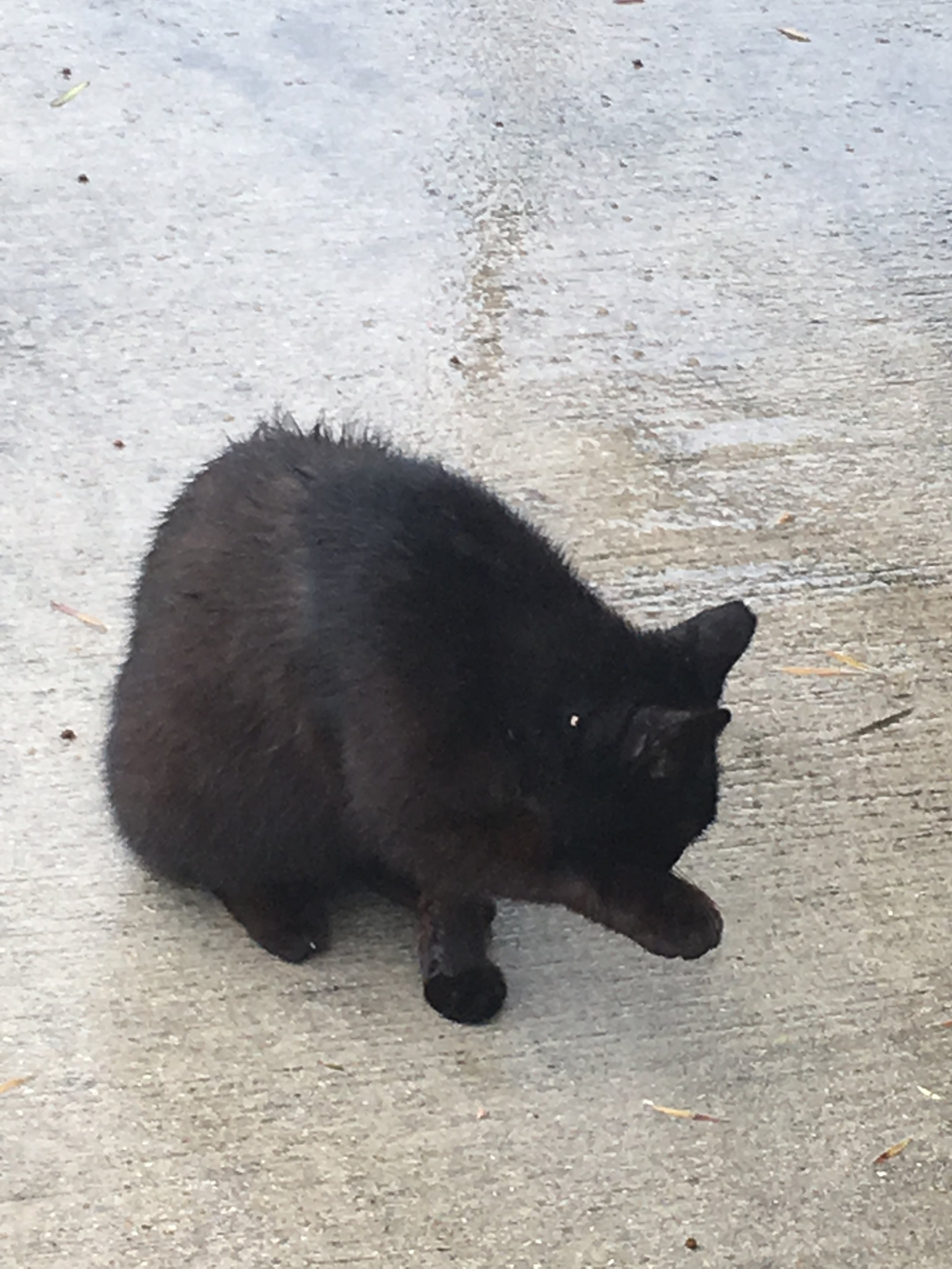 Random friendly af black cat on campus crossed my path, which led me to buy a car this week - can't even explain how my brain works