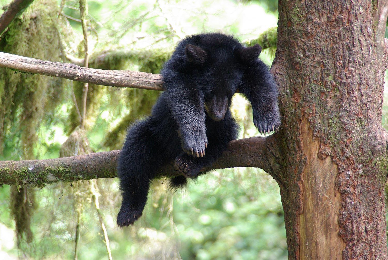 bear cub.jpg