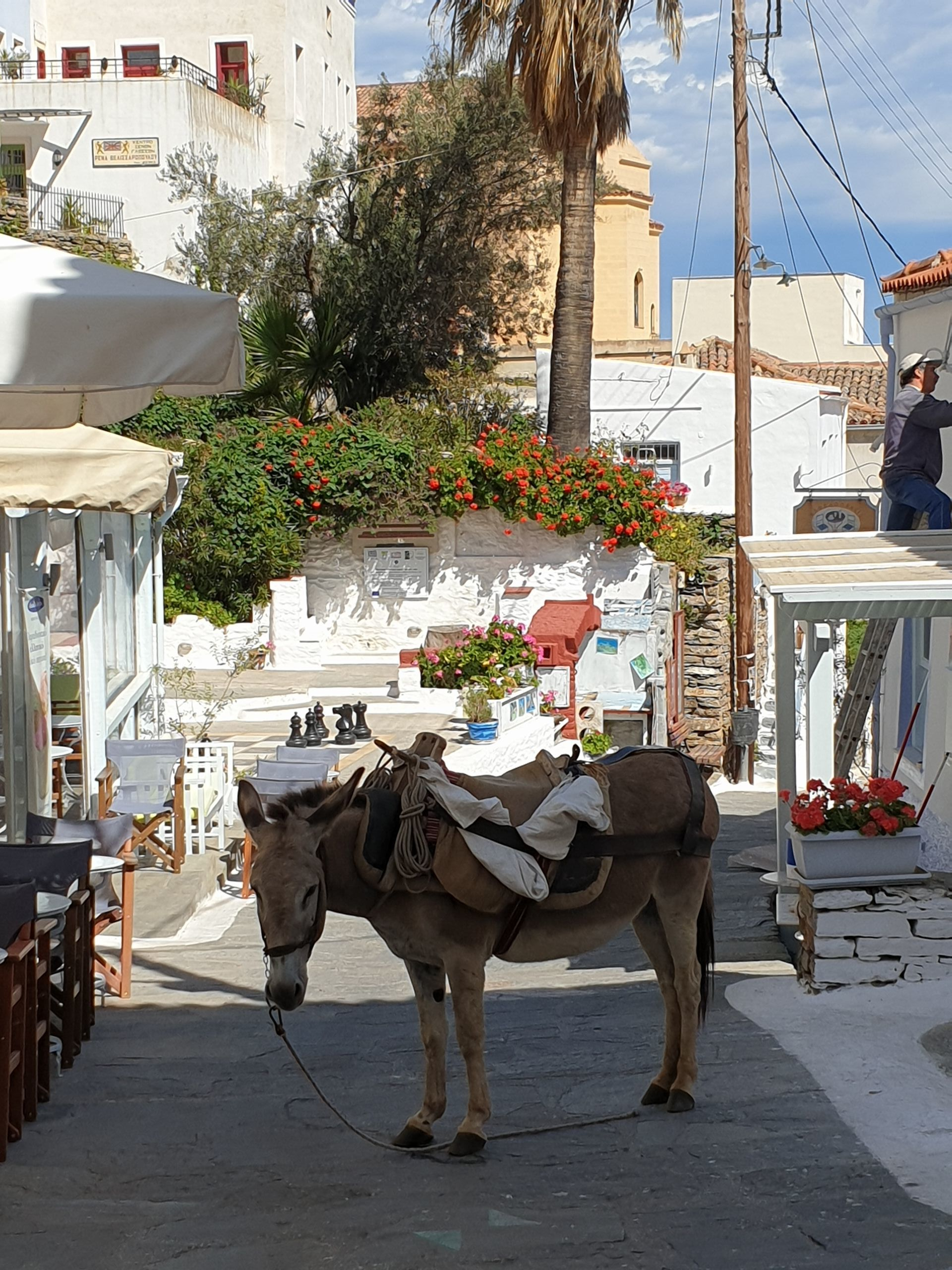 A donkey waiting for work in the hilltop town of Ioulis, Tzia.