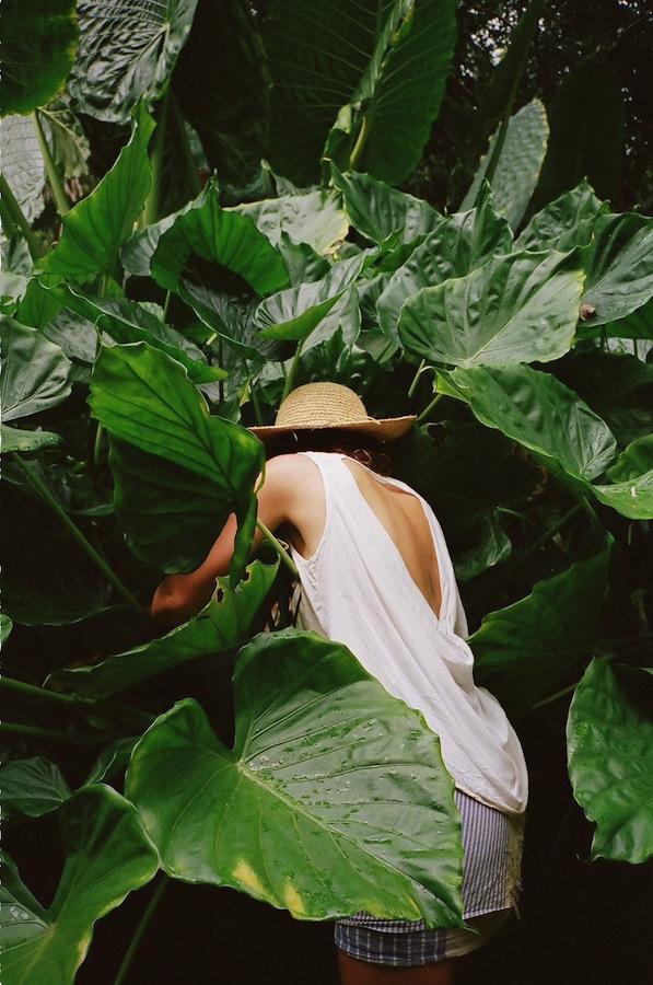 Oahu wedding florist, oahu wedding flowers, oahu modern florist, oahu florist, Honolulu wedding florist, honolulu wedding flowers, honolulu modern florist, honolulu florist, Hawaii wedding florist, hawaii wedding flowers, hawaii modern florist, hawaii florist