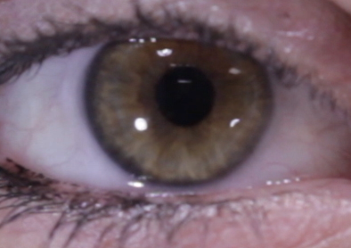 This is the image of an iris.