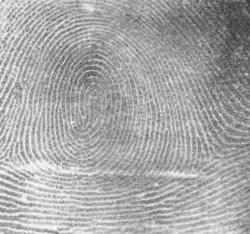 Fingerprint patterns are unique.