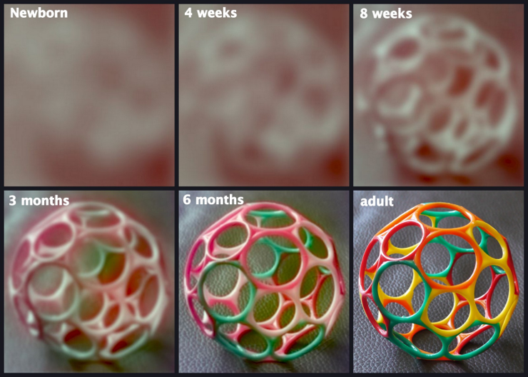 How vision develops in the first six months of life.