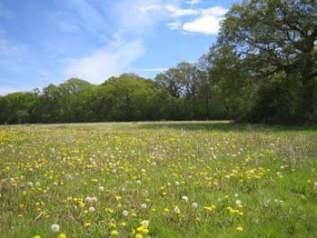 190724 Friars Oak Field.JPG
