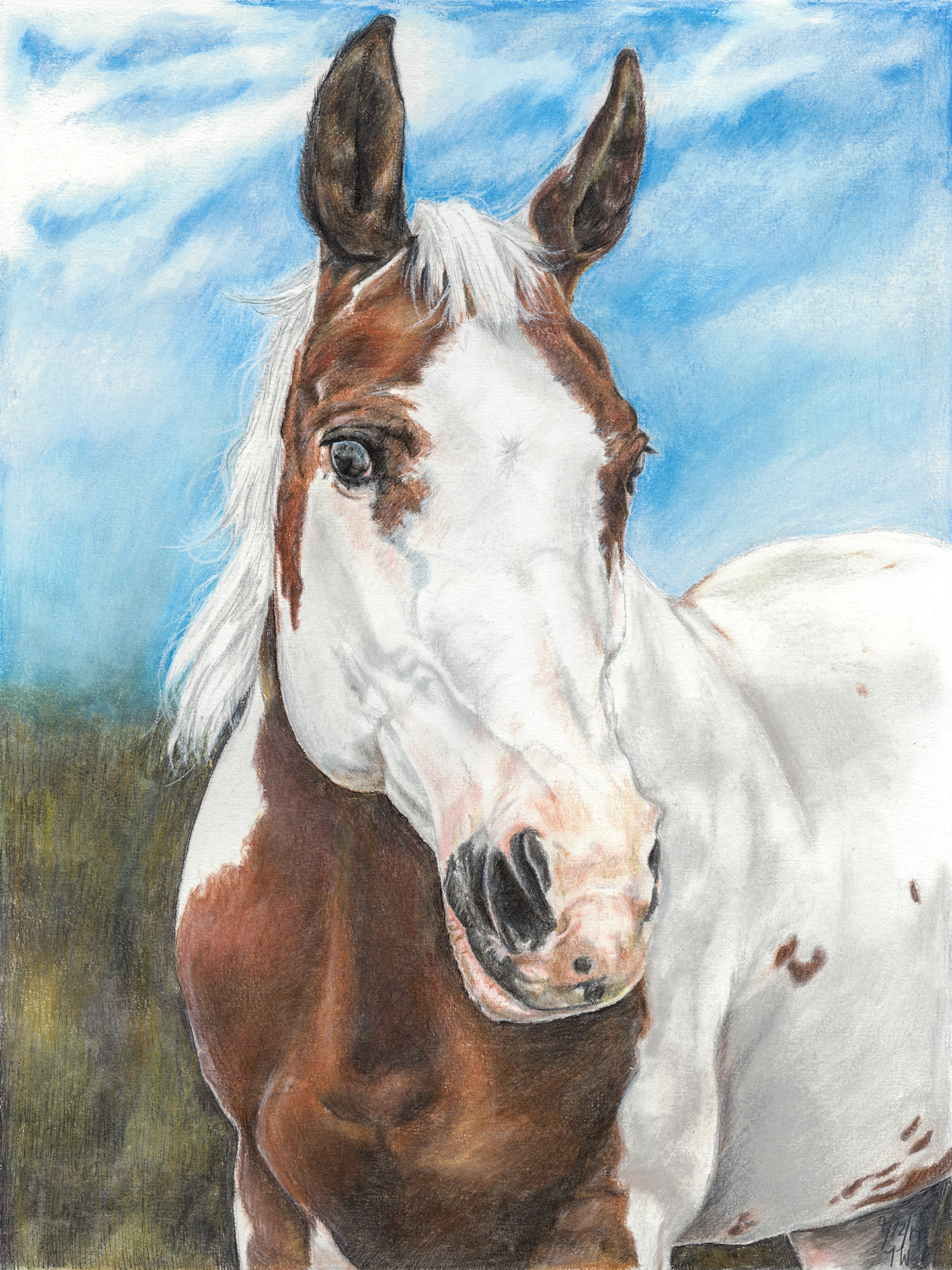 Brown and White Horse.jpg
