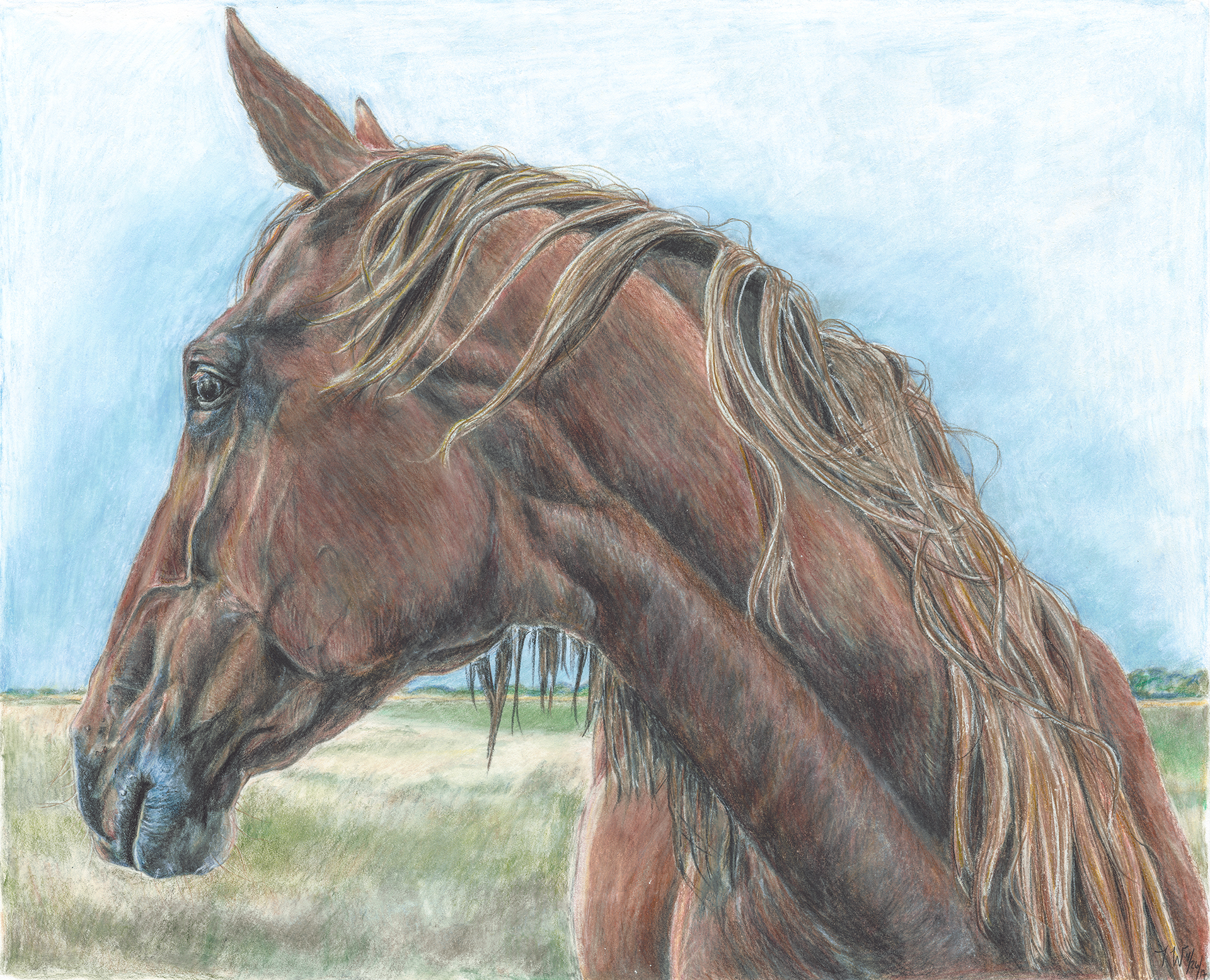Brown Horse Looking Away.jpg