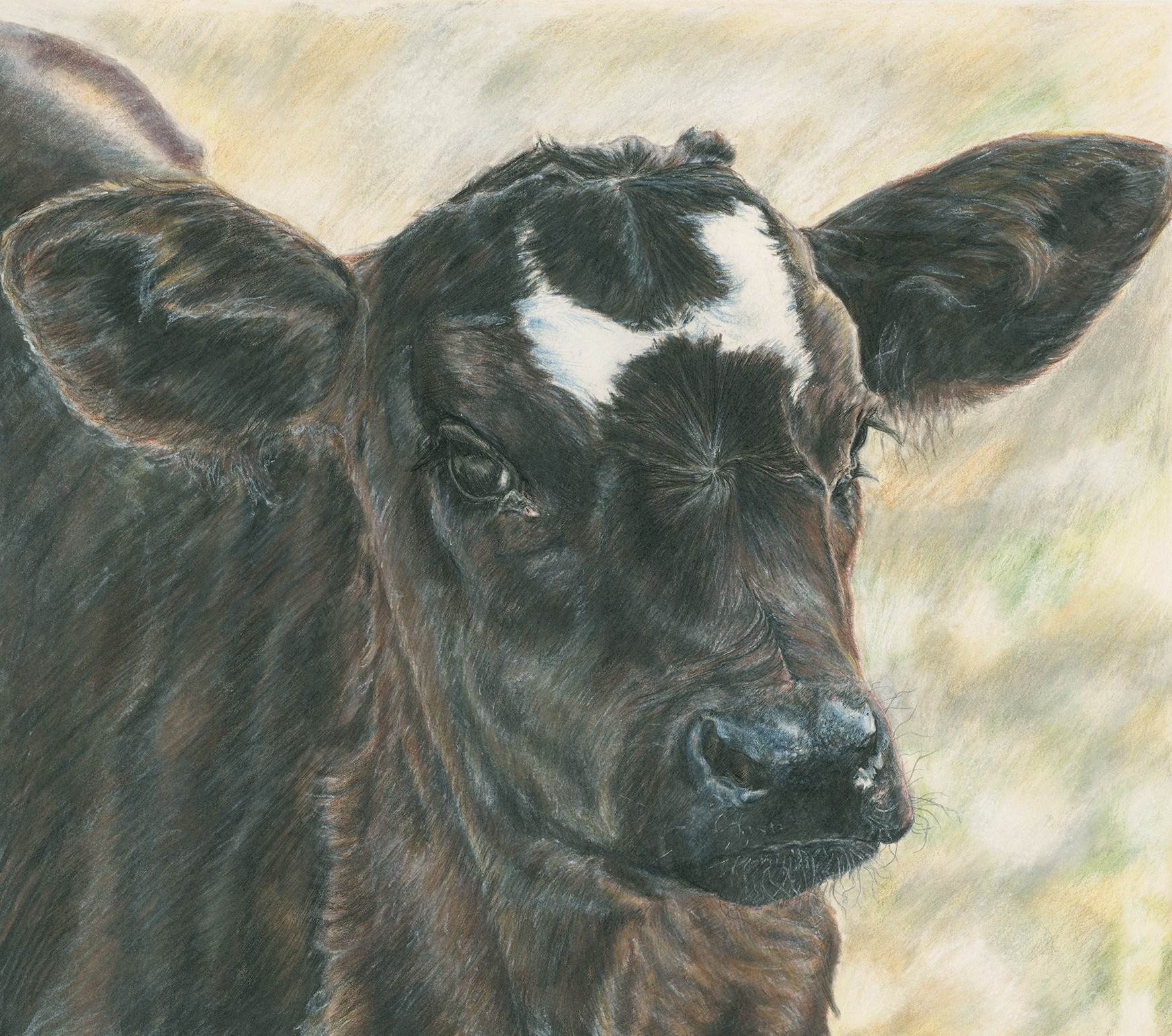 black calf (1).jpg