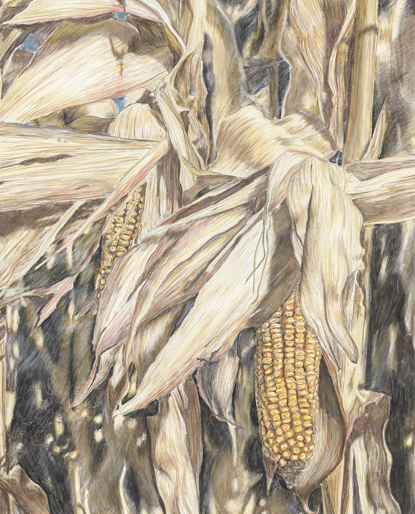 Corn II-small.jpg