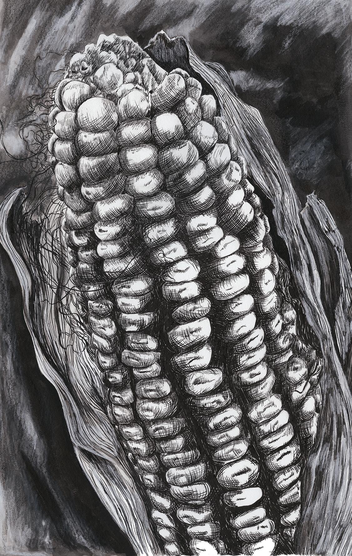 Corn-small (1).jpg