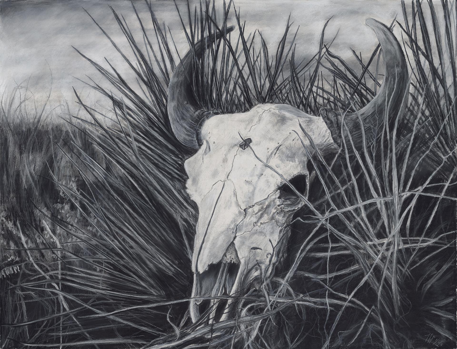 Skull in Field.jpg
