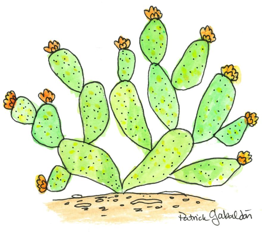 Blooming Prickly Pear.jpg