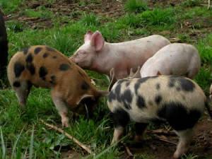 Worden Hill Farm - Wolfgang Ortloff