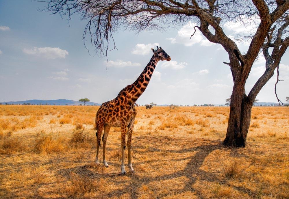 sudafrica-3.jpg