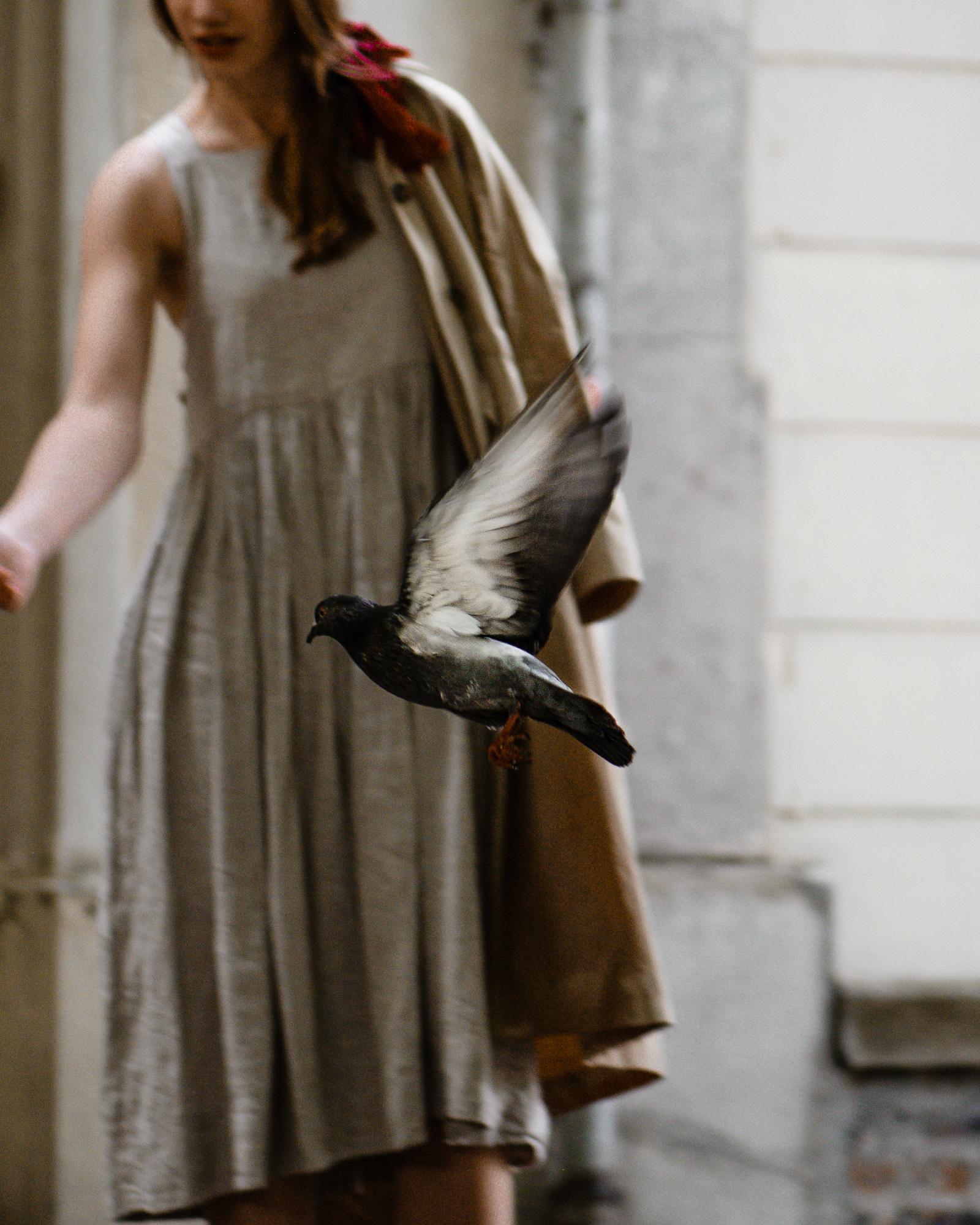 Pigeon - Paris