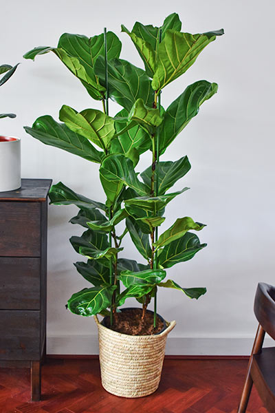 House Plants always brighten up a Home!