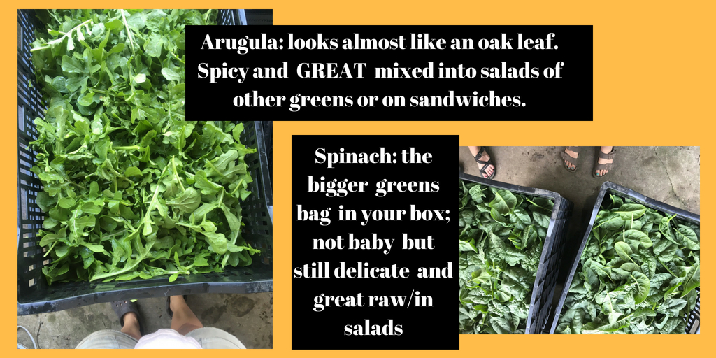 Arugula_ looks almost like an oak leaf. Spicy and GREAT mixed into salads of other greens or on sandwiches..jpg