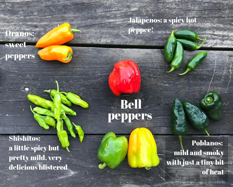 Oranos_ sweet peppers.jpg