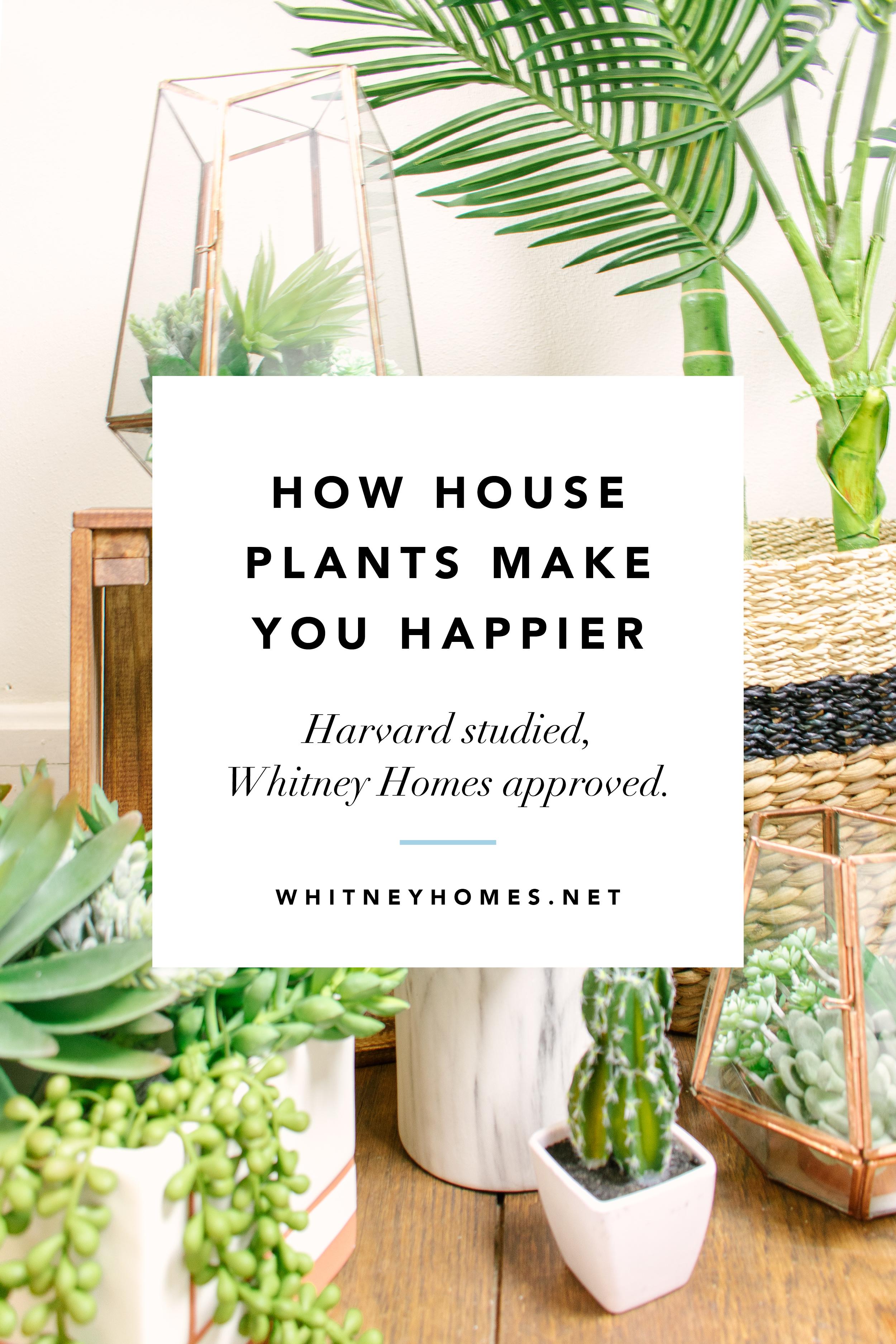 WH_Plants-Happy10.jpg