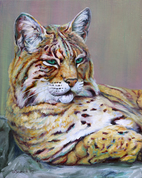 green-eyes-bobcat-sarah-soward.jpg