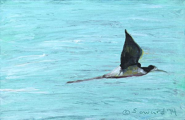 Stilt in Flight copyright Sarah Soward.