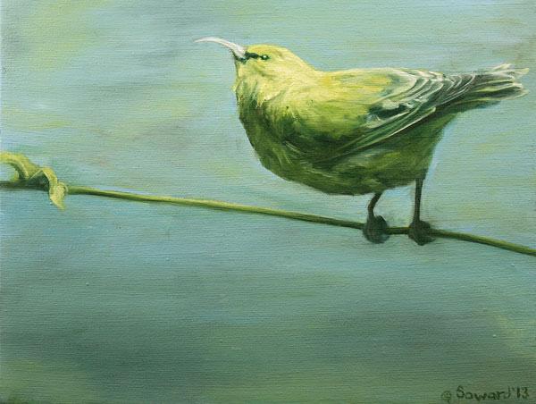 Ready to Fly (Amakihi) copyright Sarah Soward.