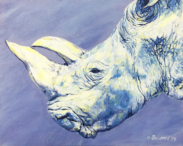 Gracie Rhino  copyright Sarah Soward.