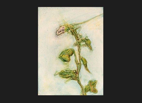 Lavendula  copyright Sarah Soward.