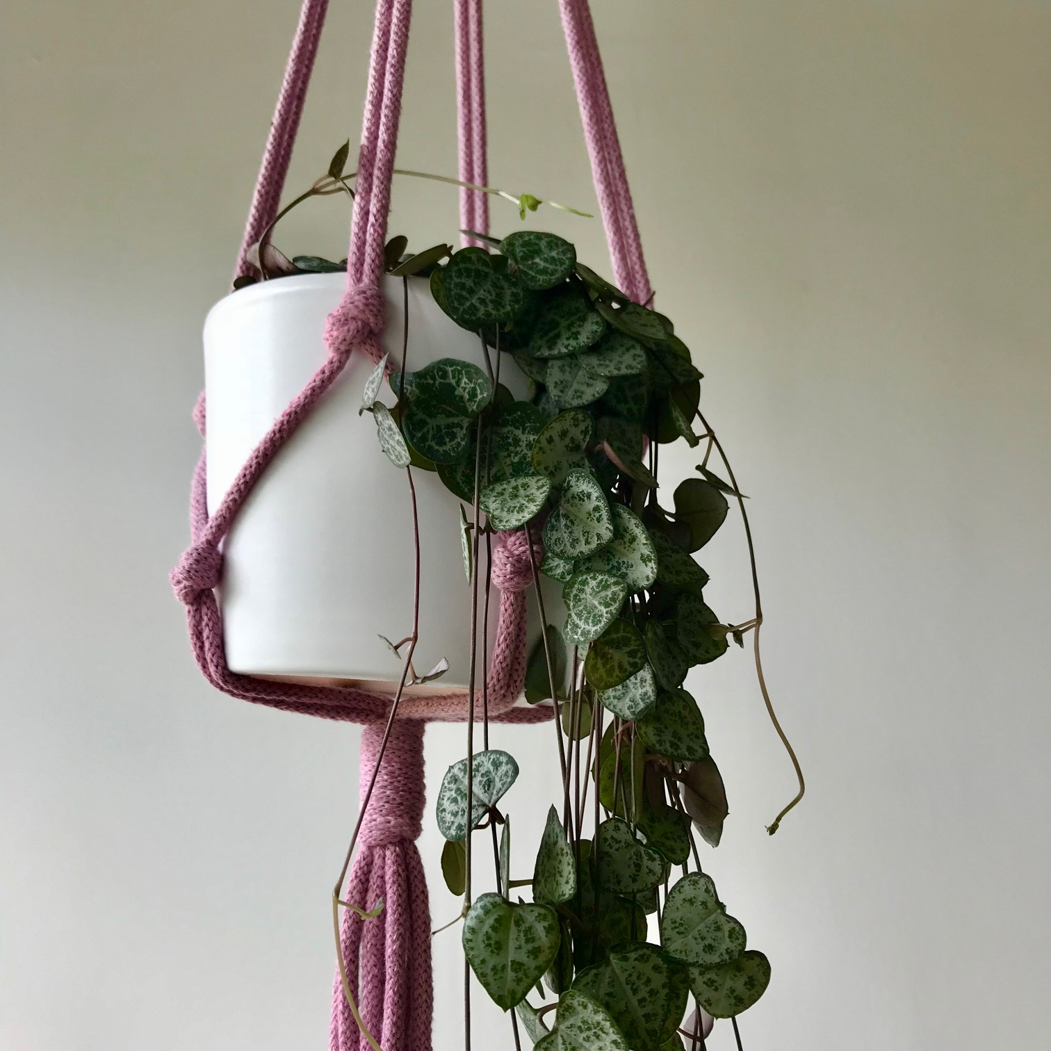 Display your plant in this Macrame Hanger & Pot  Combo