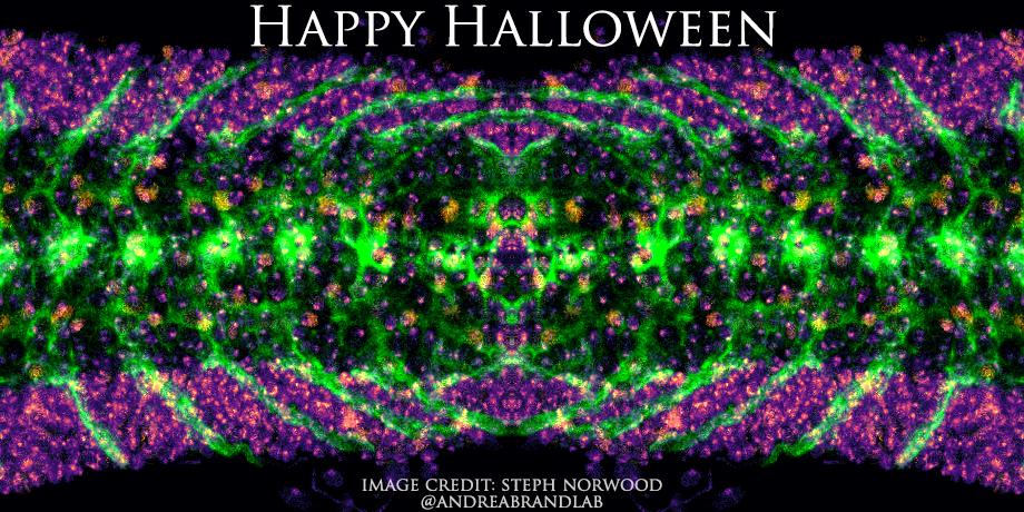 Halloween_2018.jpg