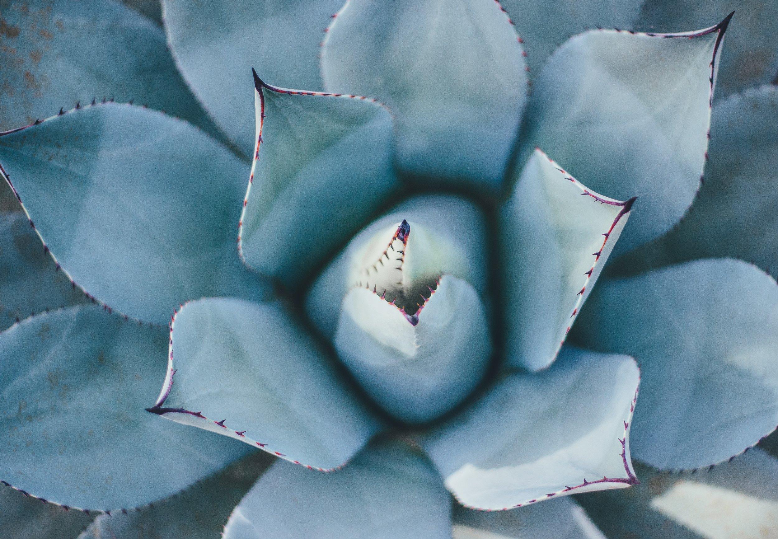 hartcoherentie - plant.jpg