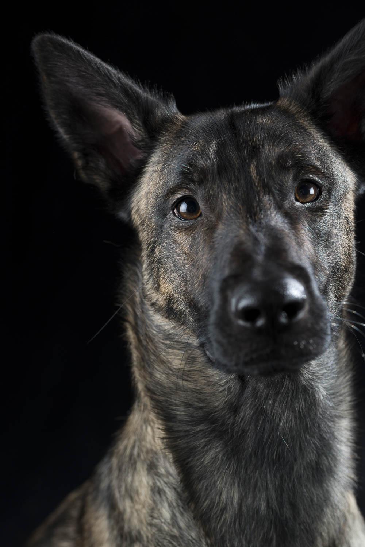 Indigo, meine Begleiterin in der Hundeschule