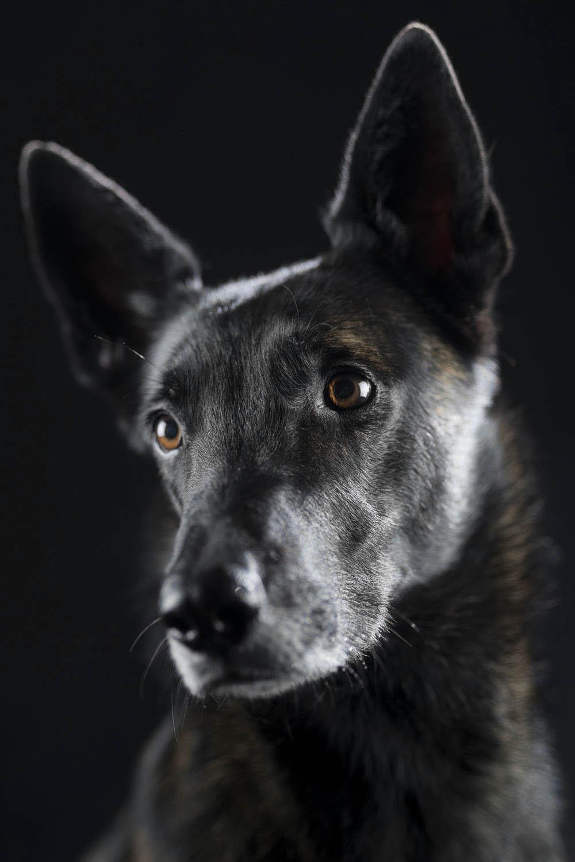 Rosa, meine Begleiterin in der Hundeschule