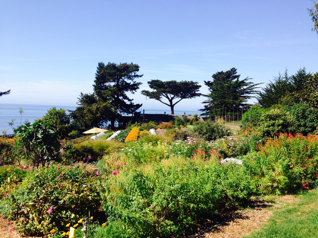 The Esalen Garden is a haven of joy