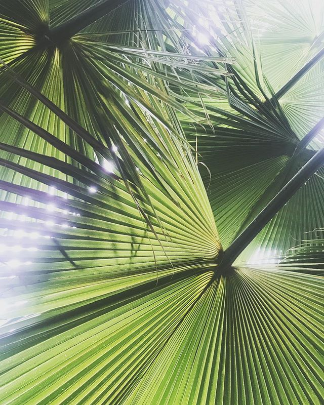 """""""I'm waiting for it, that green light, I want it"""" 🌿🌞 ~ ~ ~ #leaves #leaf #photography #nature #natural #fashion #naturephotography #relax #seafoam #love #liveauthentic #fengshui #vacation #instagood #happy #plants #minimal #minimalism"""