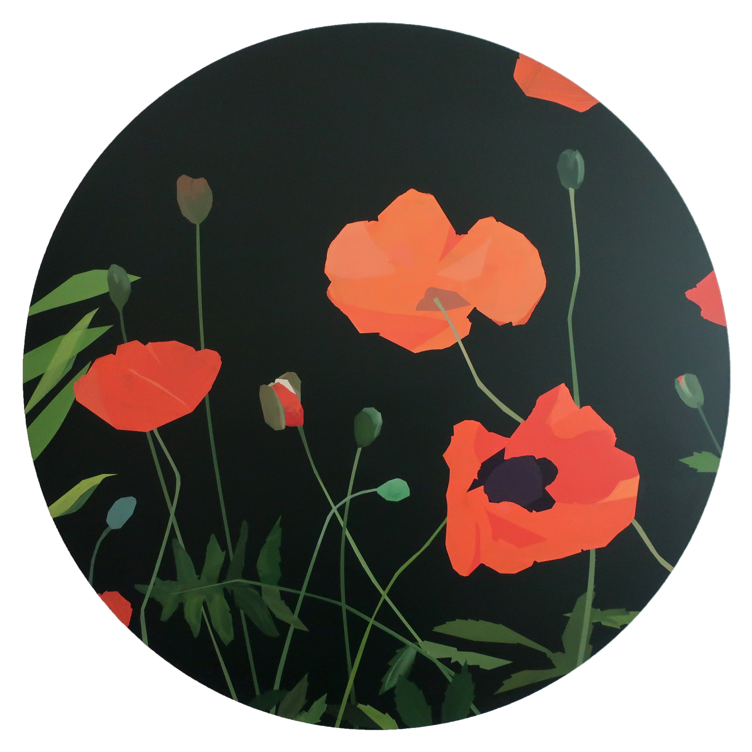 Poppies, Waiting to Unfold