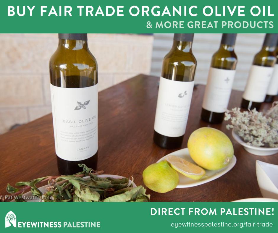 Social Ads - Olive Oil.png