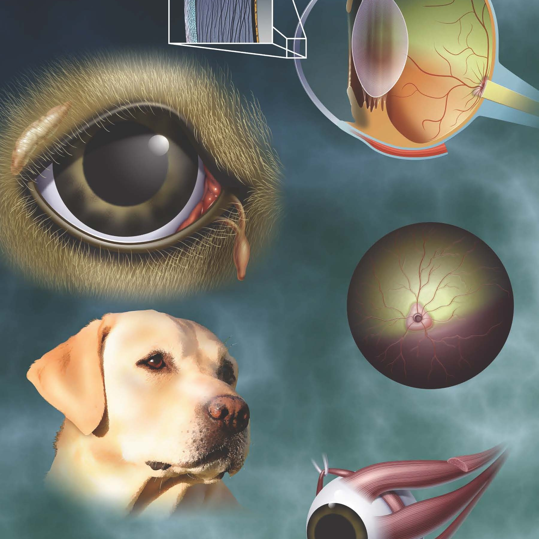 Canine Eye Anatomy Posters - Full size posters for clinic offices. Also available as small or large notepads (members only).