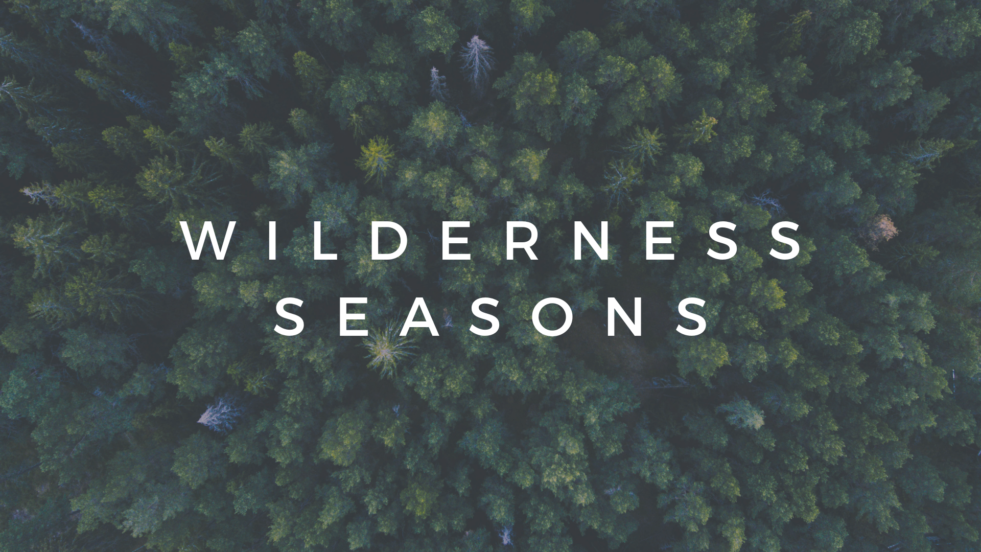 WILDERNESS - Standalone (5).png