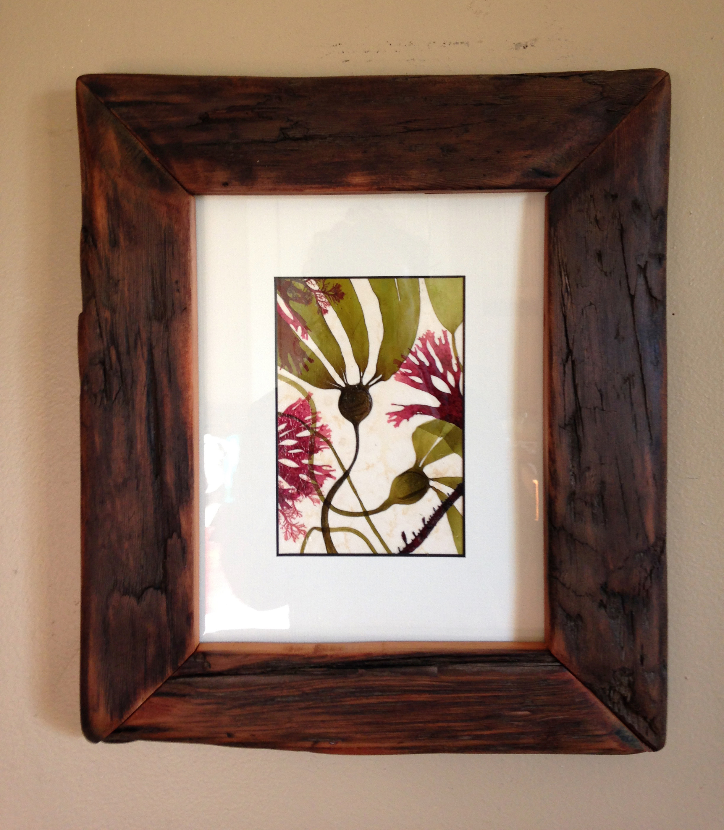 Driftwood frame with pressed seaweed by  Coastal Prezence  in Victoria. Available  by commission .