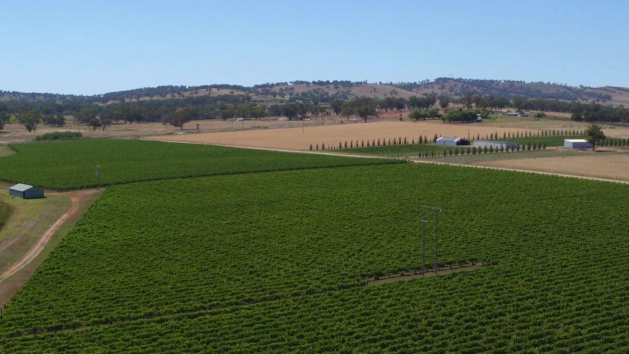 Gatecrasher Vineyard, Mudgee,Central Ranges