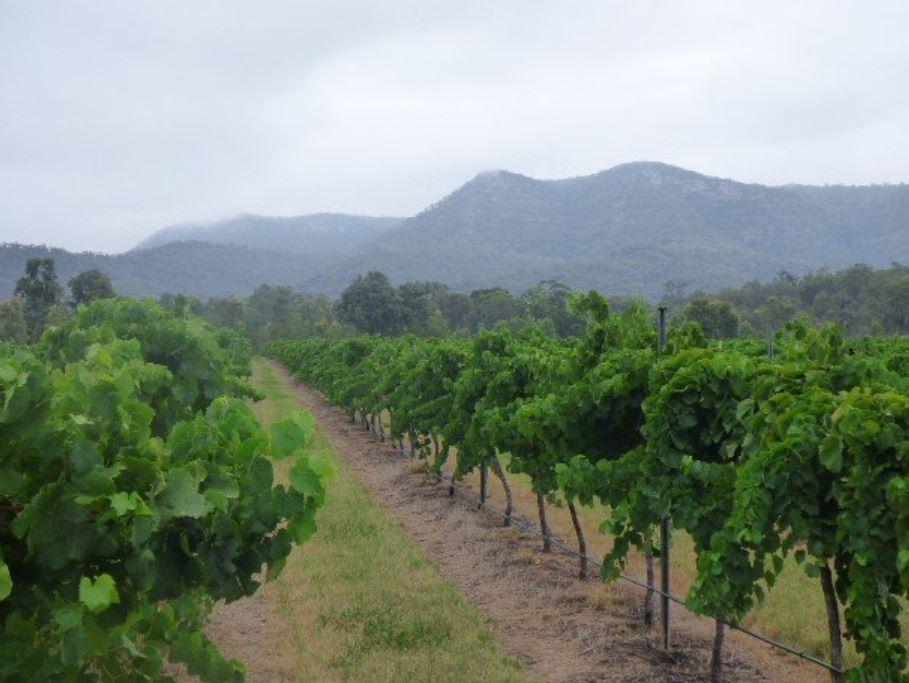 vineyardmountains.JPG