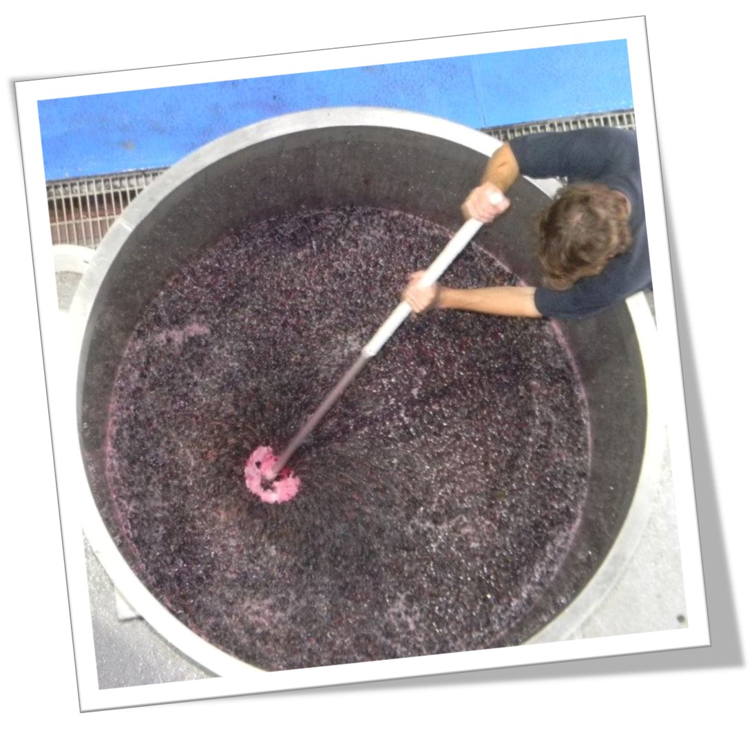 Hand plunging the shiraz