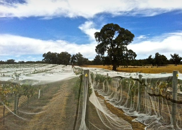 Netting protects from wildlife, the north winds and sun