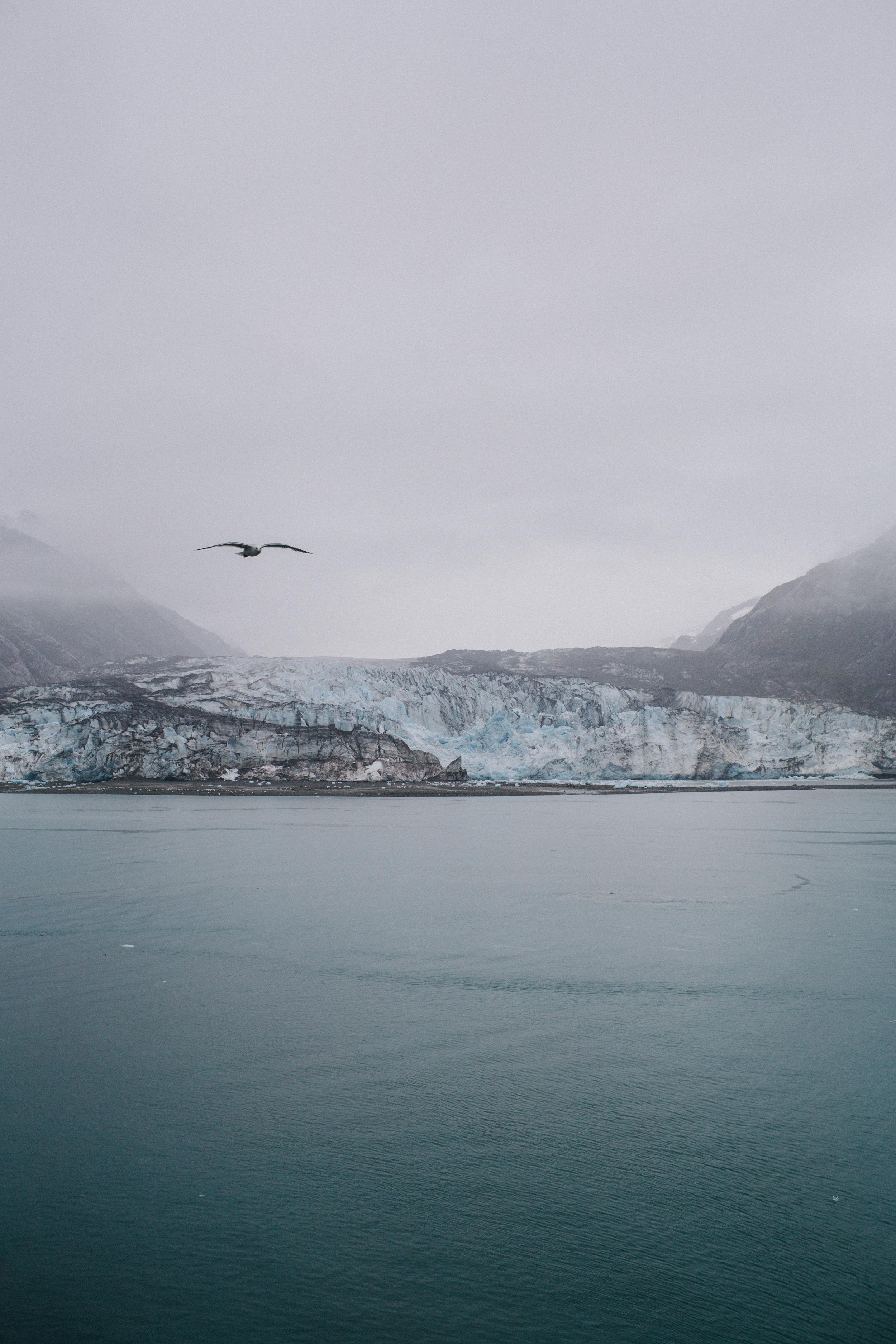 GlacierBayAlaska2_TR2018 (1 of 18).jpg