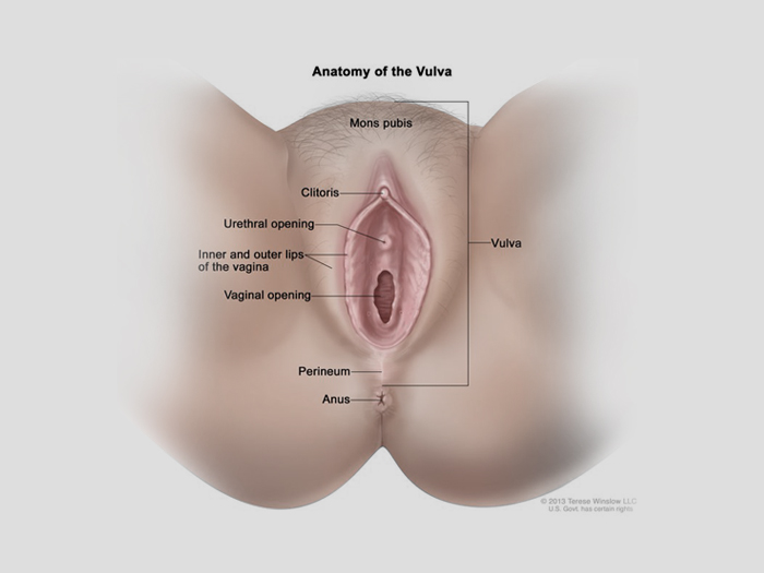 5893c-vulva.jpg