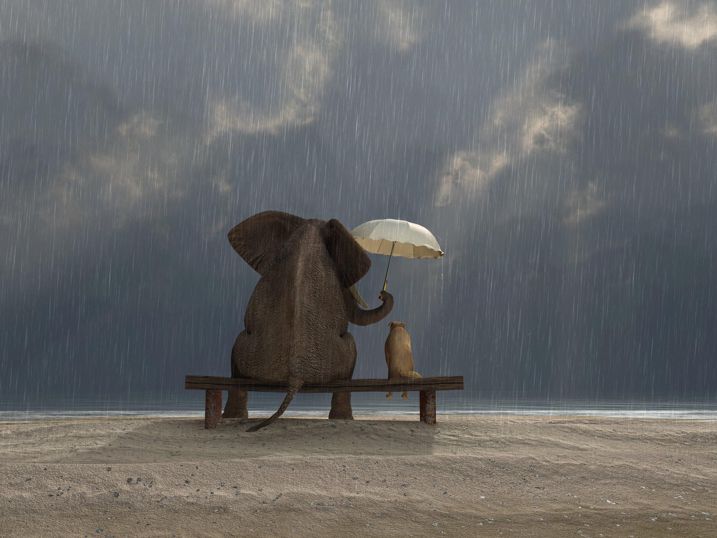 Elephant-and-Dog.jpg